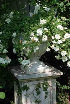 Miniature white Roses gracefully spill from an Urn resting on a plinth. These architectural bases are especially attractive when they have become weathered.