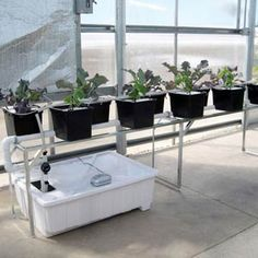 For growers interested in #hydroponics, these PolyMax® Dutch Bucket Systems provide an easy start for production. The system comes complete with all of the technical components necessary to begin a growing system, including BPA free Easy Drain Reservoirs; 11 liter Dutch Buckets made with long-lasting PolyMax®; Heavy-Duty Digital Timers; and all the necessary plumbing materials. This is the perfect system to begin hydroponic growing!
