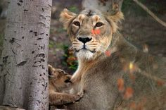 Love to Mom. Photo by HITESH TOLIA -- National Geographic Your Shot