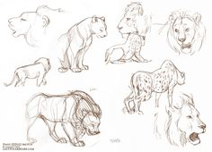 Daily_Animal_Sketch_116