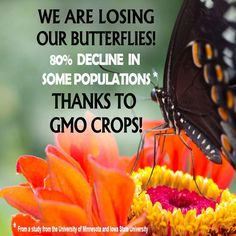 it's not just bees that are disappearing ! Monsanto's GMO crops are dangerous for all of us  Be the reason our environment improves for decades to come at http://www.fuzeus.com