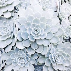 'Cactus' iPhone Case by Rooss Cacti And Succulents, Planting Succulents, Planting Flowers, Fleur Delacour, Plants Are Friends, Cactus Y Suculentas, Plantar, Ravenclaw, Botany