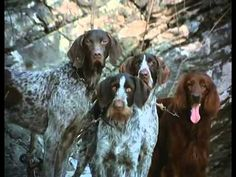 Vadon szava Teljes film Magyarul Dogs, Youtube, Animals, Animales, Animaux, Pet Dogs, Doggies, Animal, Animais