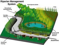 cold wetland poplar silviculture - Buscar con Google