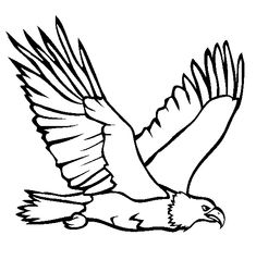 Bald Eagle coloring printable                                                                                                                                                      More
