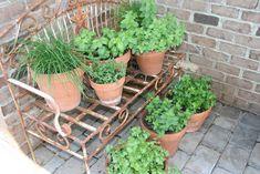 Herbgarden Container Herb Garden Diy