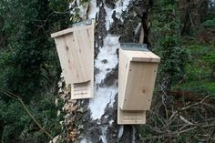 Bat Box by Wudwerx on Etsy