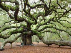 Atemberaubender sehr alter Baum
