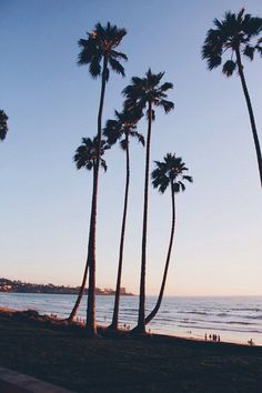 Image result for sunset with palm trees tumblr night