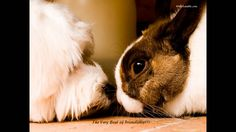 cuniculi to be trasmitted from an infected rabbit to a dog? My sister has a positive rabbit and my dog was just diagnosed with kidney Friendship Wallpaper, Friendship Images, Happy Friendship Day, Best Friend Images, Best Friend Wallpaper, Goofy Dog, 15 Dogs, Cute Animal Videos, Animal Pictures