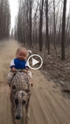 Baby toy and speed dogs - baby toys,speed dogs,dog breeds,funny animals Baby Animals, Funny Animals, Cute Animals, Girl And Dog, Funny Animal Videos, Baby Dogs, Pet Store, Funny Dogs, Cute Cats