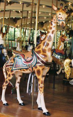 San Francisco Zoo Carousel  Dentzel Giraffe Outside Row Stander