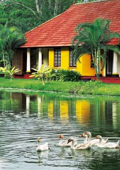 taj vivanta kumarakom hotel