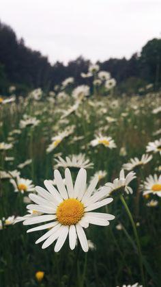 Entscheide dich fürs Glück, stöbere dich durch meinen Methodenkoffer und lass dich inspirieren über Themen wie Natur, Lernen und Entscheidungen. Flowers, Plants, Learning, Nature, Florals, Plant, Flower, Bloemen, Planting