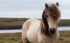 Hero Veterinarian Takes 900-Mile Journey to Help Standing Rock Horses