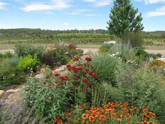 High Plains Nursery Display Garden Come visit and see it for yourself during nursery hours Monday - Saturday Colorado Mountains, Rocky Mountains, Durango Colorado, Planting Shrubs, Grass, Vineyard, Nursery, Amp, Display
