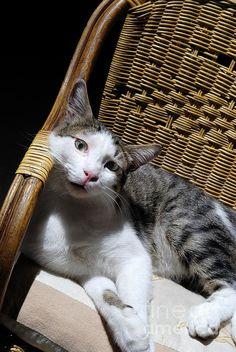 Cat lying on wooden children chair