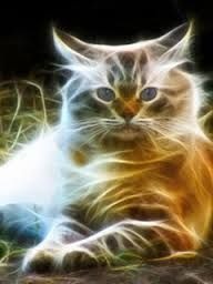 Neon Cat, Magic Illusions, Different Forms Of Art, Ghost Cat, Cat Coloring Page, Cat Sketch, Beautiful Fantasy Art, Fire Art, Animal Wallpaper