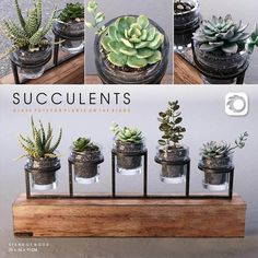 Succulent Plants in Glass Pot model, This succulent plant model textures low-poly ready for VR, accurately design for perfect visualization Planting Succulents, Potted Plants, Indoor Plants, Succulent Plants, Aquaponics Fish, Aquaponics System, 3d Max Vray, Plant In Glass, 3d Visualization