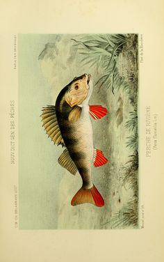 La Pêche et les poissons : - Biodiversity Heritage Library