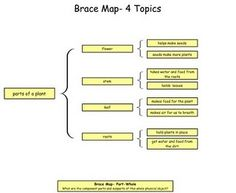 plant brace maps in Kidspiration