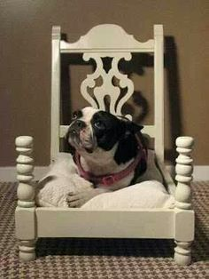 Chair dog bed