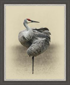 Image result for sandhill crane painting