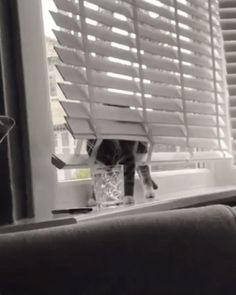 Cat Has a Drinking Problem