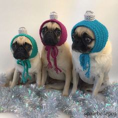 The cutest Christmas ornaments I've ever seen. Photo by Animals And Pets, Baby Animals, Funny Animals, Cute Animals, Cute Funny Dogs, Cute Pugs, Cutest Pug Ever, Pugs And Kisses, Funny Xmas