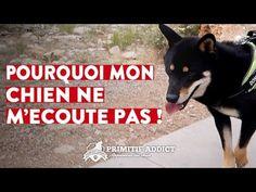 YouTube Beagle, Animals And Pets, Puppies, Motivation, Dogs, Phoenix, Funny Cats, Funny Animals, Stuff Stuff