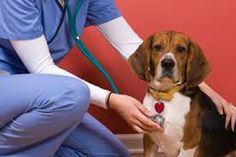 Las familias gastan alrededor de 9 mil pesos al año en comida y en el cuidado de su mascota. Para el otro miembro más de la casa ya hay seguros que cubren gastos médicos por 90 pesos y daños a…