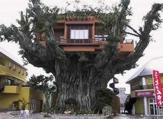 This is one awesome tree house.