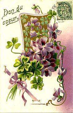 Vintage French violets
