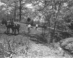 Plowing with a mule team and sowing lespedeza by hand along a creek bank in Sumner County, Tennessee. 1941