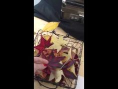 Preserving fall leaves with common kitchen wax paper - YouTube