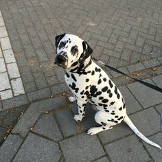 So sweet waiting before crossing the street