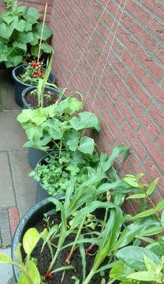 My garden,my food...