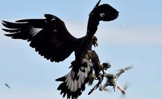Terrorists Are Building Drones. France Is Destroying Them With Eagles.