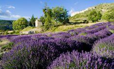 Gite à Grignan en Drôme provençale avec piscine : Mas de la Plume d'ange - Gites Grignan