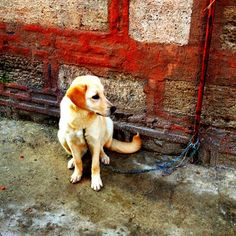 doggy friend | Around the World with an iPhone and Camera+