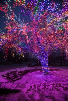 Magic tree-old location. Christmas Morning in Columbia in Boone County Missouri.©Notley Hawkins - Been here. Love this tree. Christmas Morning, Christmas Holidays, Xmas, Magical Christmas, Christmas Deco, Christmas Cookies, Beautiful Places, Beautiful Pictures, Christmas Light Installation