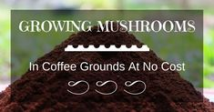 Most people who go in for mushroom growing just go out and buy both the spores (or spawn) and the growth medium. They do this because this is the easiest way to grow mushrooms. But if you are thinking of growing mushrooms commercially Growing Mushrooms Indoors, Growing Vegetables, Growing Plants, Edible Mushrooms, Stuffed Mushrooms, Mushroom Spores, Uses For Coffee Grounds, Organic Protein, Food