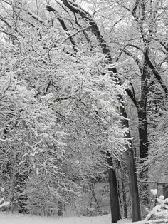 Winter photograph  Fresh Snow black and white by lilypadprints,