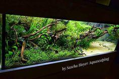 #aquariumtanksfreshwater #AquariumTanksIdeas