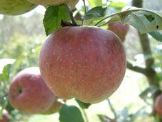 Kinnairds Choice Fruit