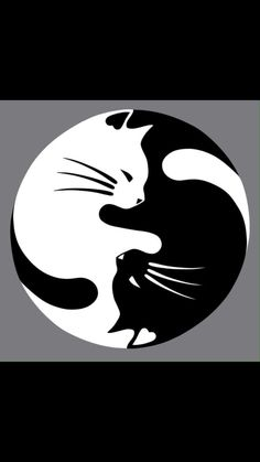 Black and White Yin Yang Cats Counted Cross by InstantCrossStitch Pebble Painting, Pebble Art, Stone Painting, Stone Crafts, Rock Crafts, Art Rupestre, Art Pierre, Rock And Pebbles, Rock Painting Designs