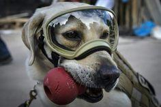 La perrita rescatista Frida Terremoto en México La protagonista de los binomios caninos de rescate de la Secretaría de Marina de México se ha convertido en todo un símbolo de esperanza luego del sismo del 19 de septiembre. Estos gestos son prueba de que está muy dentro del corazón de los mexicanos: