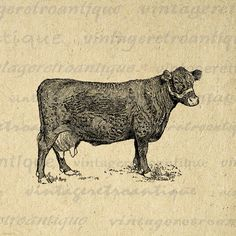 Digital Farm Cow Printable Graphic Illustration Image Download Vintage Clip Art. High quality digital image download for making prints, fabric transfers, tote bags, and much more. Real printable antique clip art. Antique artwork. This graphic is high quality at 8½ x 11 inches large. Transparent background version included with every graphic.