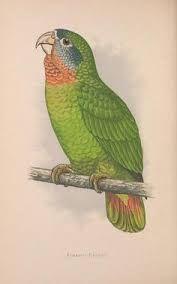 Bildergebnis für waiting for rebirth.. v. 27 (1920) - Novitates Zoologicae. - Biodiversity Heritage Library