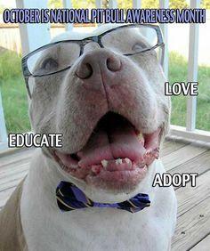 Love, Educate & Adopt!!!